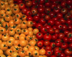 Hamakua Springs tomatoes